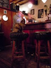 Cat at Da Rat (the Bar)