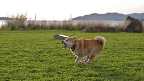 20121224 Running and barking