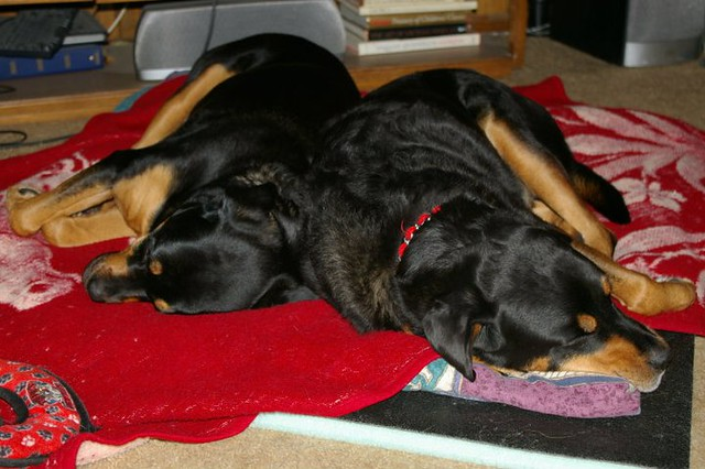 Roxy and Apollo napping during Blizzard of Feb 2011