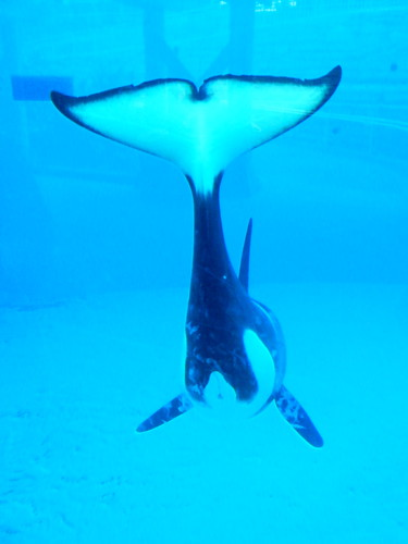 orca butt