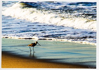 Strolling on the Sand
