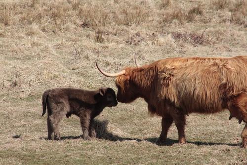 Nosing her baby