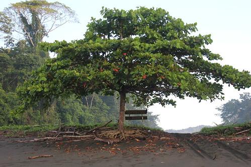 El árbol que está en la entrada a la estación por la playa.