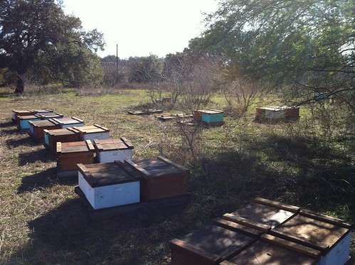 Boxes on palettes - ready for nucs