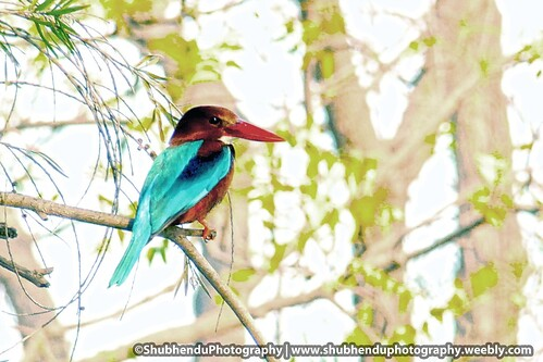 King fisher-1 by ShubhenduPhotography