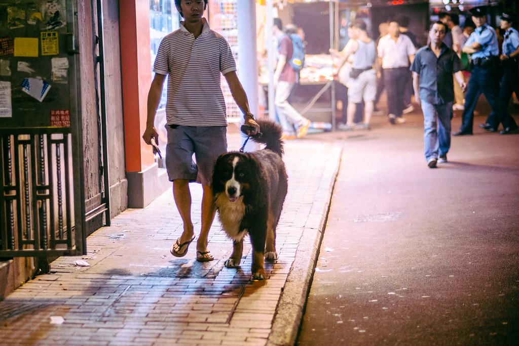 Temple Street Dog Walk