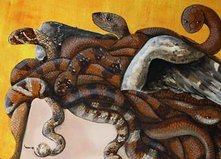Medusa Me Detail Coil