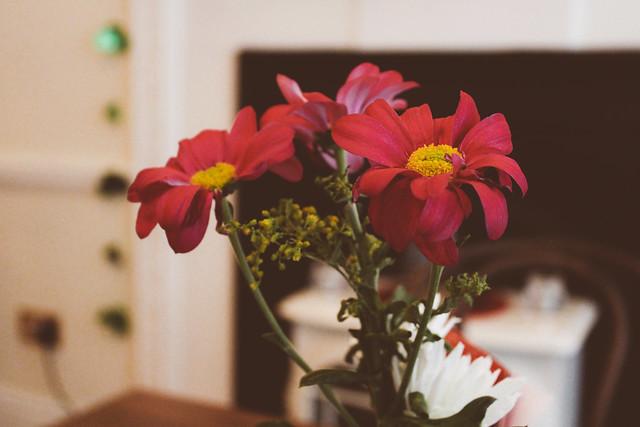 Flowers at Cornucopia