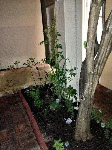 Herb garden at No.4 Blake Street
