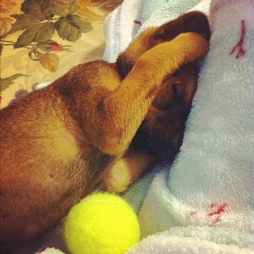 Sleepyhead. #dog #sleepy