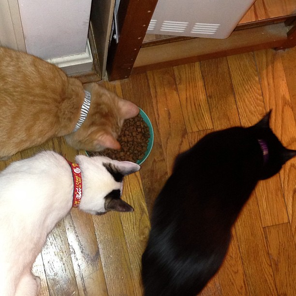 """""""He filled our favorite bowl!!!"""" #cats #catsofinstagram"""