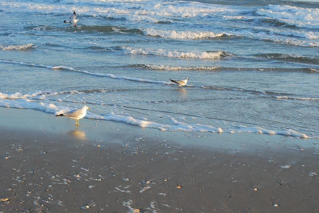 holden beach, nc, march 2013