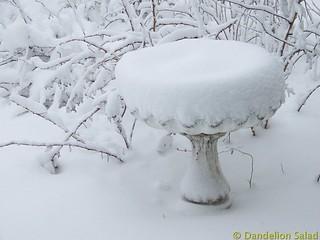 Birdbath in the Snow
