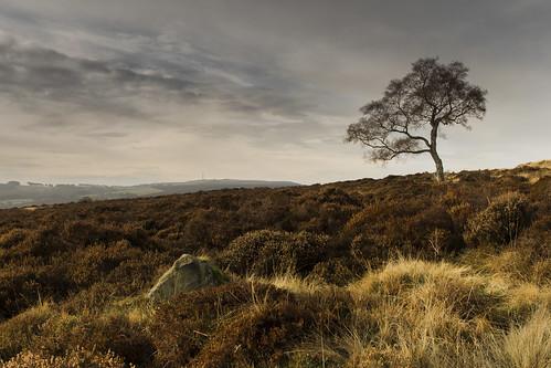 That tree - Lawrence Field
