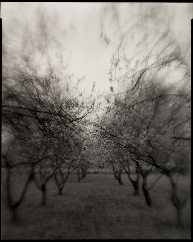 Petzval lens 8x10 film