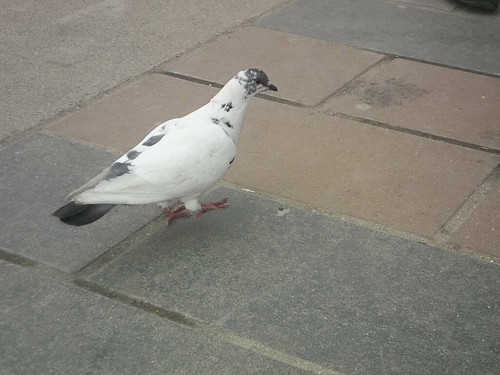 Pigeon on St. Clair (3)