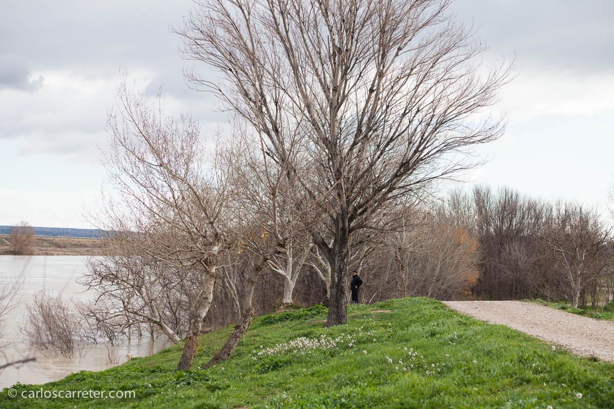 Avenida del Ebro - Soto de Cantalobos
