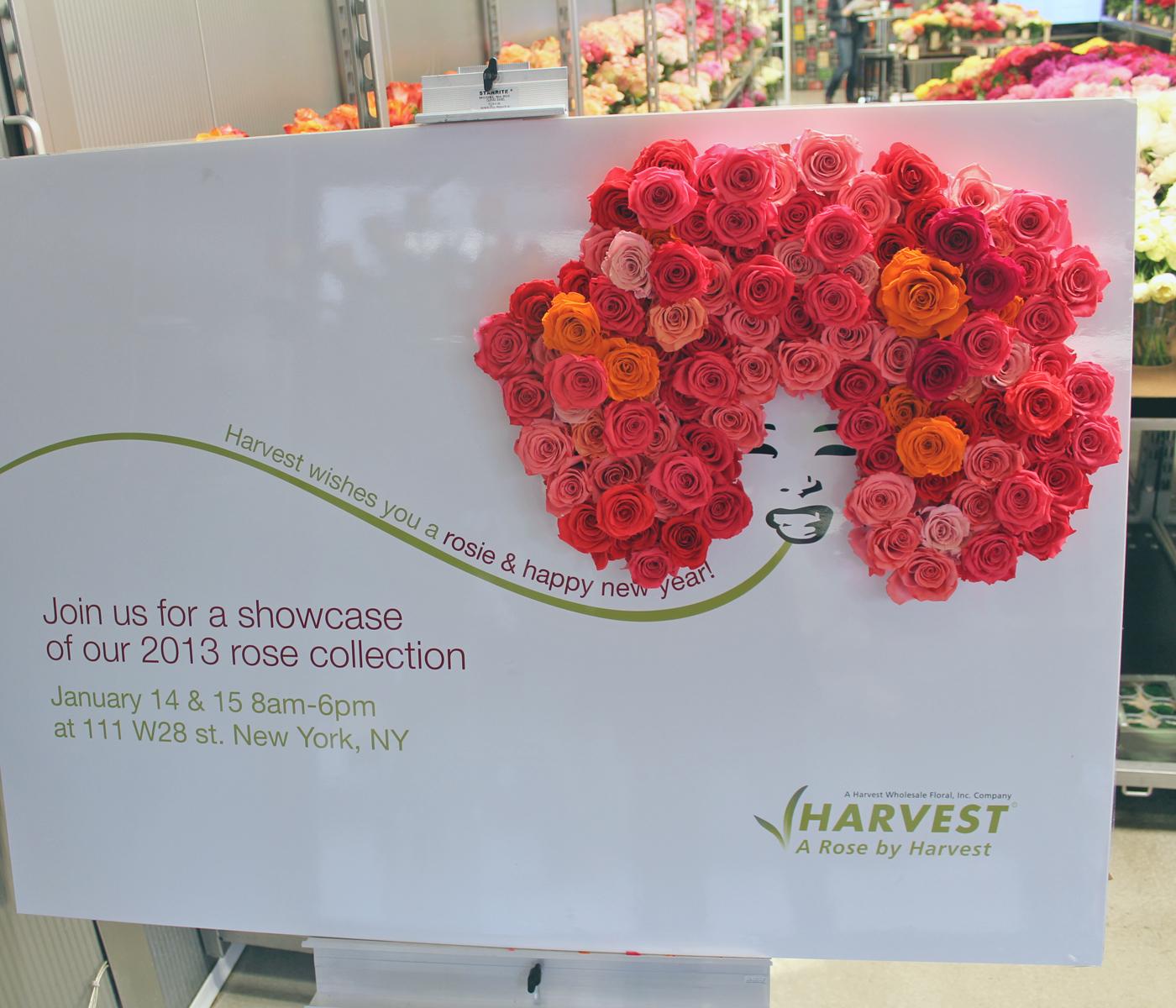 harvest-rose