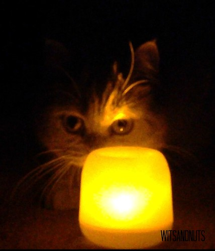 Perdita at 2013 Earth Hour