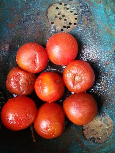Future tomato plants by smallfox2