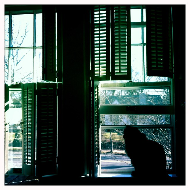 rizzo cat - winter windows