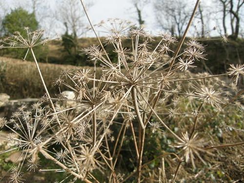 Seedhead