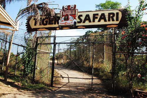 Tiger Safari.