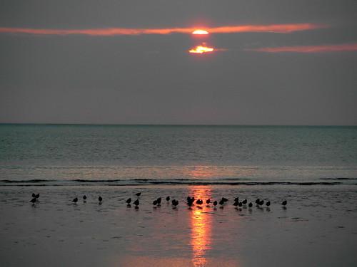 Seabirds at Sunset.