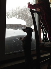 2 dachshunds high, easily. #Blizzard2013