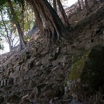 Honduras, ruinas de Copa?n 17