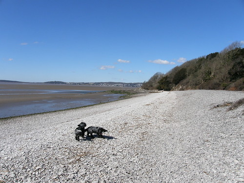 Two spaniels on the Far Arnside shingle
