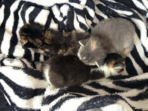 Mia's Kittens 1