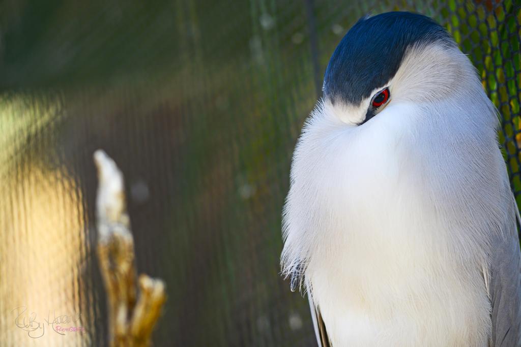 A Stunning Bird