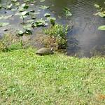 Miami, Everglades 04