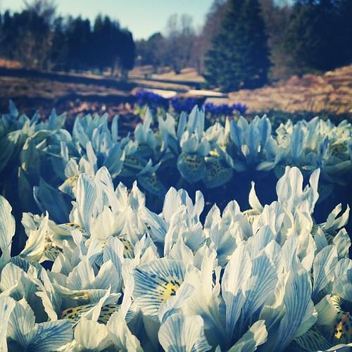Spring @ Tallinn Botanic Garden