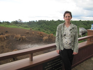 Elephants at the Ark