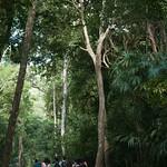 Guatemala, Ruinas de Tikal 02