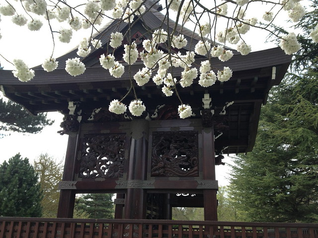 Kew cherry blossom - Chokushi Mon
