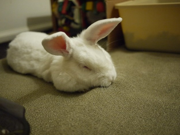 sleepy gus napping