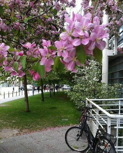 Blossom ~ L'Institut  ~ Paris ~ MjYj by MjYj