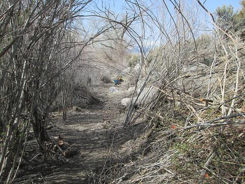 river trail corridor