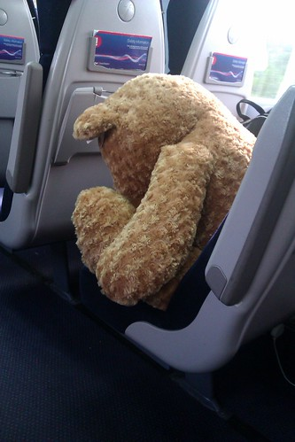 A bear on a train