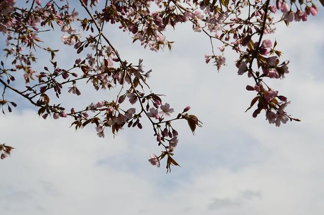2013-4-20 spring 229