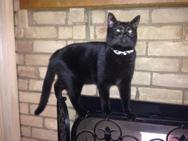 Acrobat cat - Balance