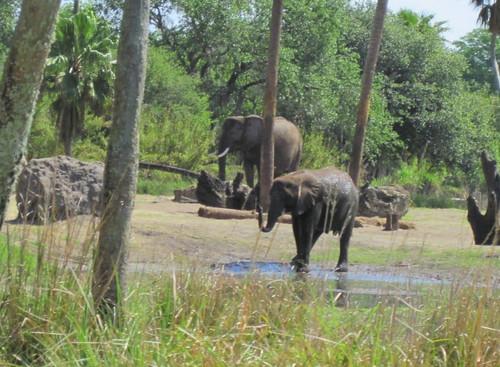 Elephants cooling off