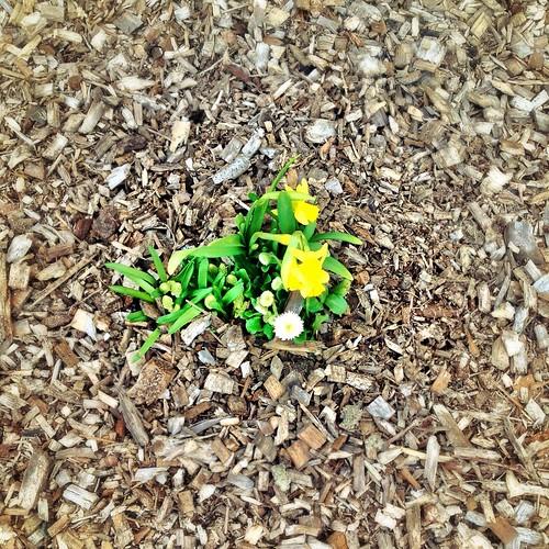 First flowers - April 2013 by SpatzMe