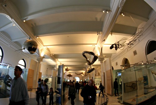 2013: American Museum of Natural History, New York #55