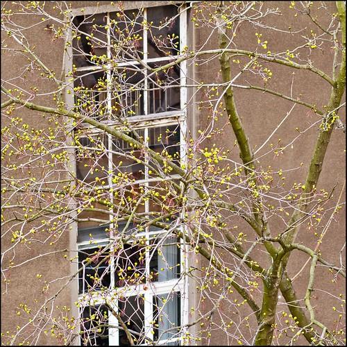 Stadtbaumblüte