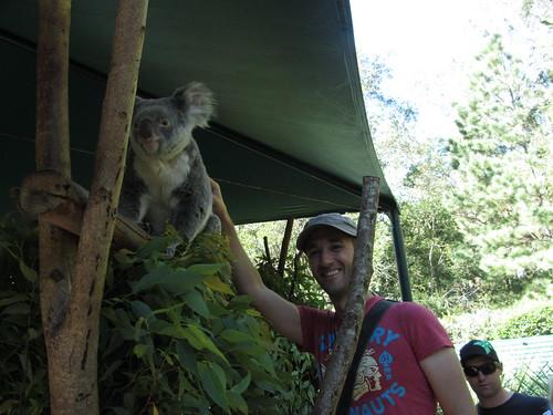 more koala fun
