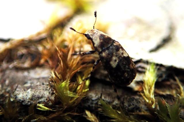 Beetle on a log